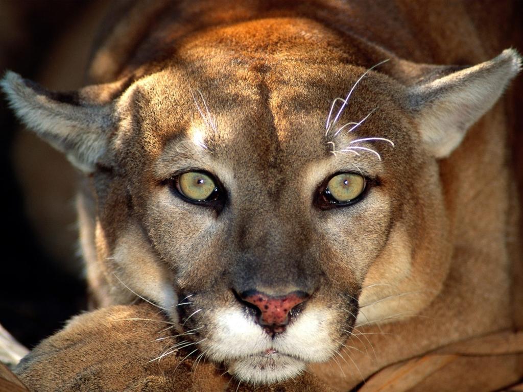 고화질 동물 바탕화면 (동물들 사진)