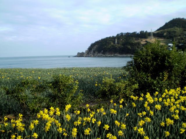 꽃이 피는 바다 거제도 / Spring of Geojyedo / 巨濟島