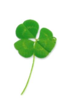 네잎 클로버, 네잎의 행운, 네잎크로버, 네잎클로버, 세잎클로버, 행운의 네잎, 행운의 네잎클로버,