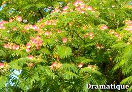 자귀나무,자생약초