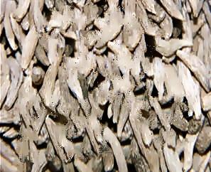 맥문동 뿌리